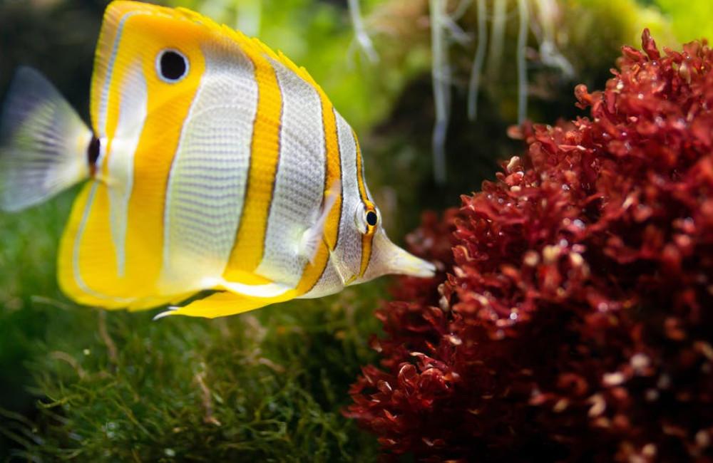 Waarom kiezen voor een juwel aquarium?