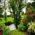Een vijver in de tuin, wat zijn de voordelen?