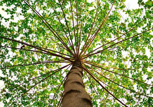 Furn.nl plant boom voor jouw tuinbank